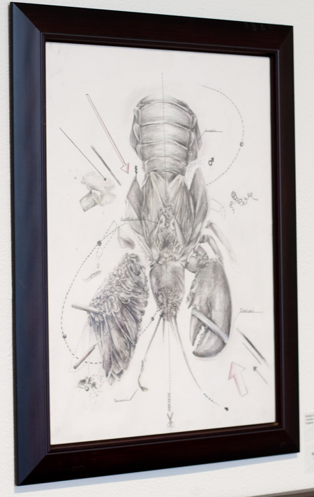 "Inga Reynolds Award for Work on Paper, Katelyn Greenhill ""Lobster"" Graphite"