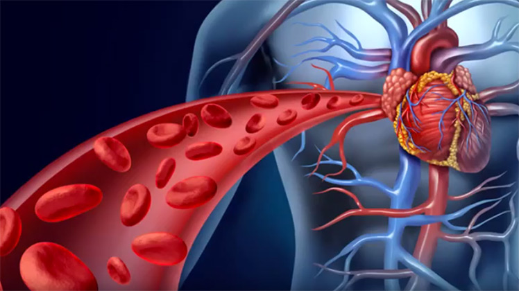 Illustration of blood flow from the heart.