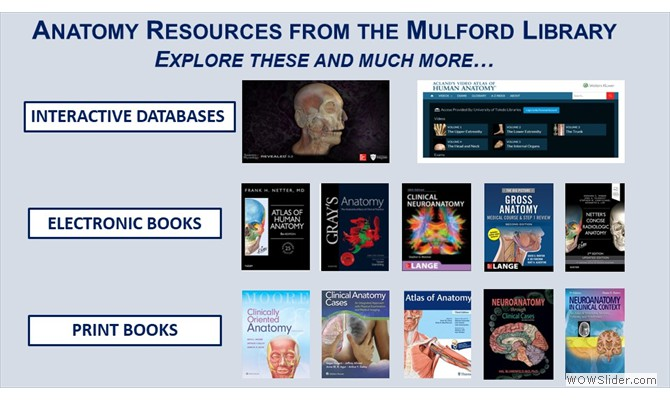 Anatomy resources available at Mulford Library