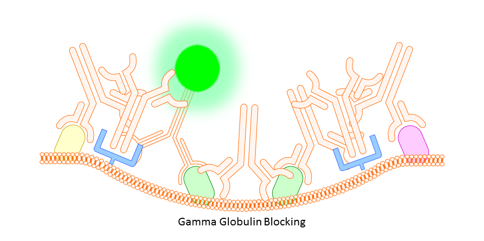 Gamma Globulin Blocking
