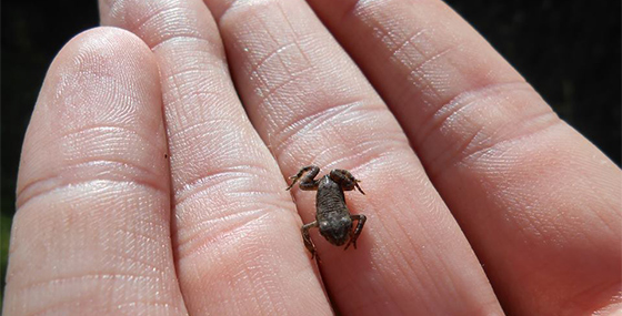 Tiny frog in palm of person's hand