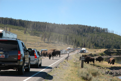 Roadblock in Yellowstone